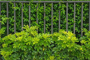 Fence Palatine IL