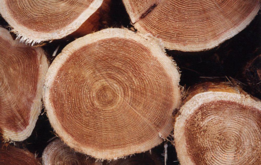 Wood42